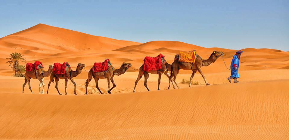 Viajes al Desierto