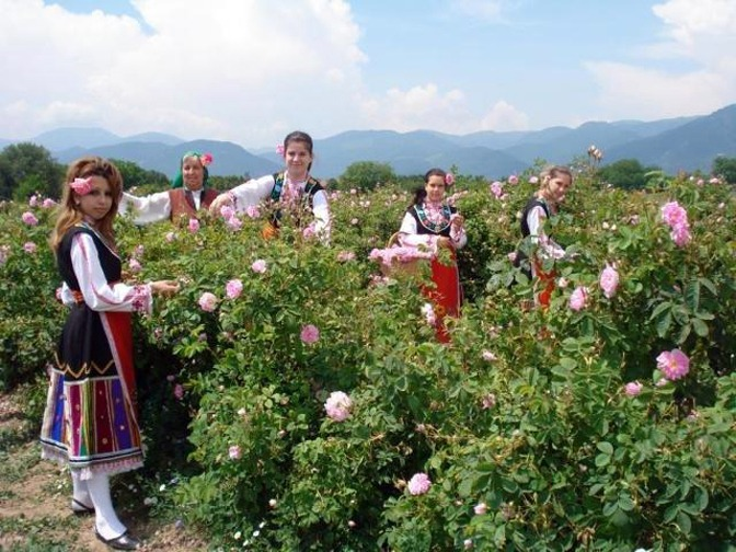 Valle rosas