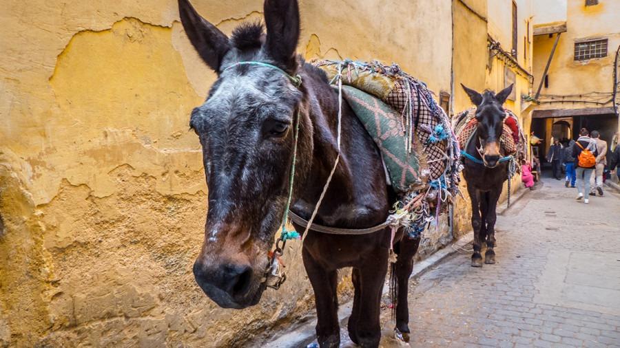 Transporte, Transporte en Fez