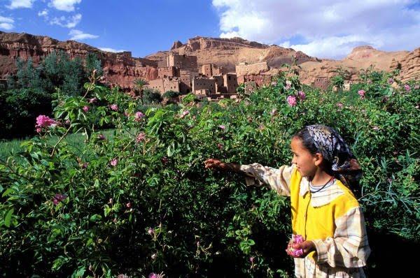 Rosas, El Valle de las Rosas y el Kelaat M´Gouna