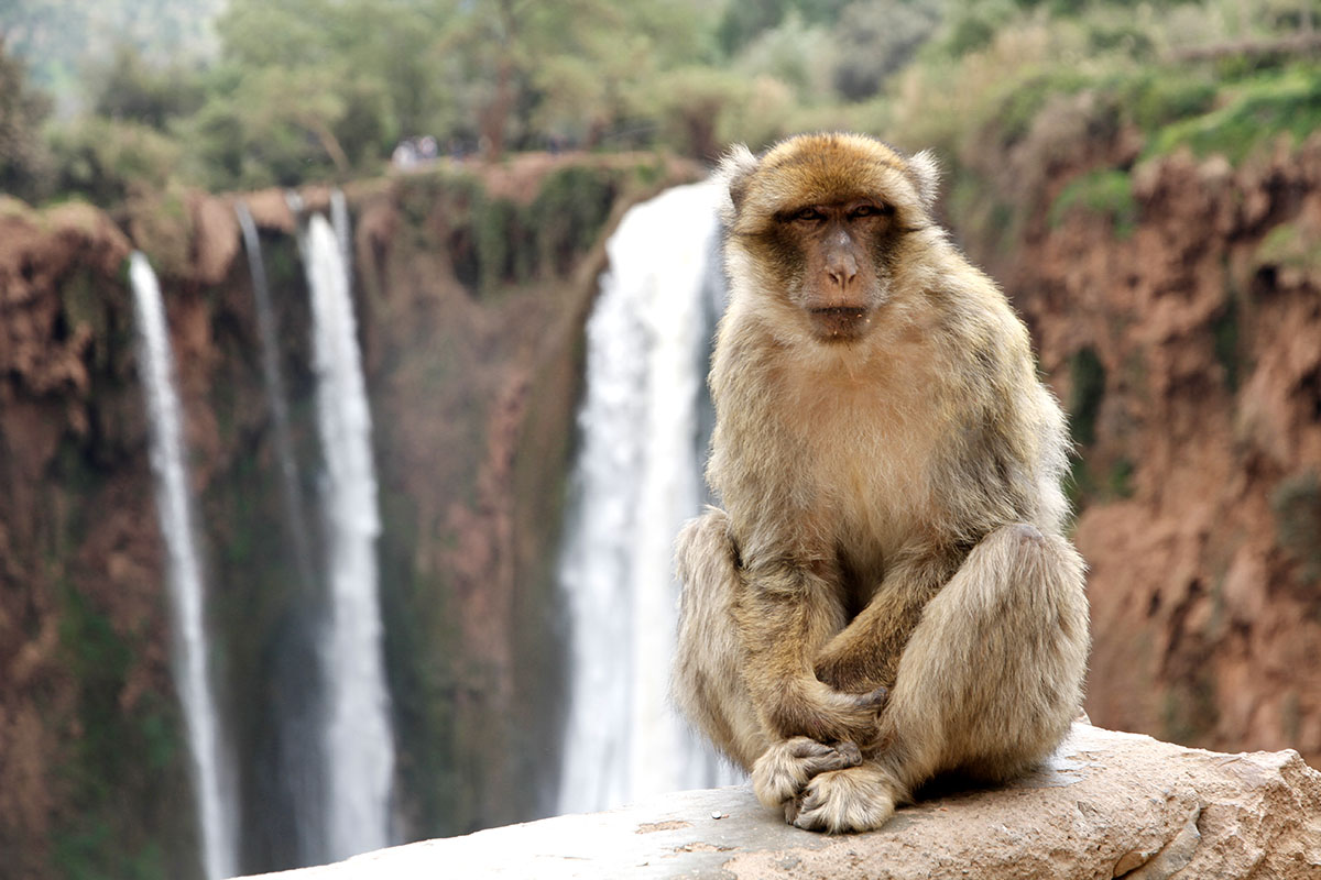 nomadas, 8 Dias – Desde Fez Desierto Nomadas y Marrakech