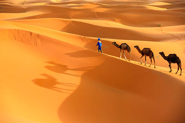Camellos Desierto del Sahara